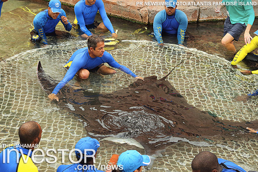 Marine experts tag manta ray for research