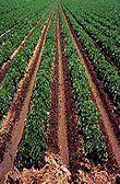 Agriculture key to Grand Bahama growth